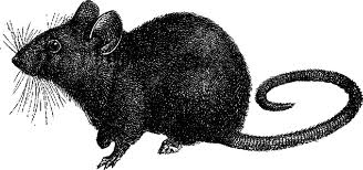 realistic mouse etching